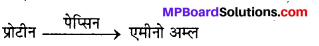 MP Board Class 12th Chemistry Solutions Chapter 14 जैव-अणु - 27