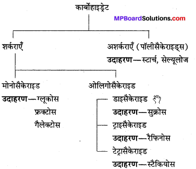 MP Board Class 12th Chemistry Solutions Chapter 14 जैव-अणु - 28