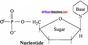 MP Board Class 12th Chemistry Solutions Chapter 14 Biomolecules - 16