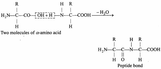 MP Board Class 12th Chemistry Solutions Chapter 14 Biomolecules - 20