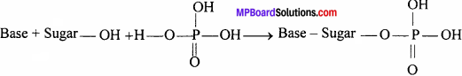 MP Board Class 12th Chemistry Solutions Chapter 14 Biomolecules - 25