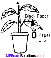 MP Board Class 7th Science Solutions Chapter 1 Nutrition in Plants img-6