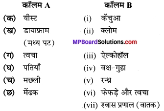 MP Board Class 7th Science Solutions Chapter 10 जीवों में श्वसन 2