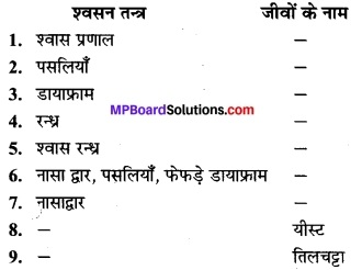 MP Board Class 7th Science Solutions Chapter 10 जीवों में श्वसन 4
