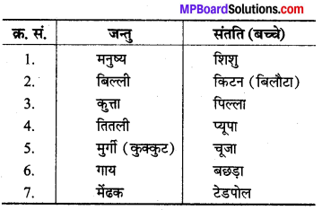 MP Board Class 8th Science Solutions Chapter 9 जंतुओं में जनन 1