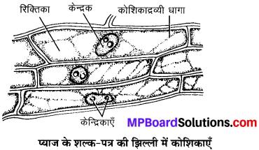 MP Board Class 9th Science Solutions Chapter 5 जीवन की मौलिक इकाई image 5