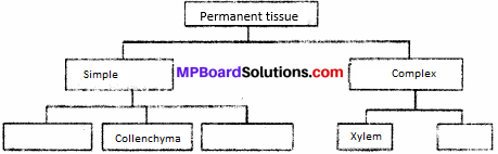 MP Board Class 9th Science Solutions Chapter 6 Tissues 5