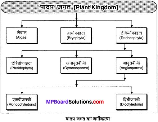 MP Board Class 9th Science Solutions Chapter 7 जीवों में विविधता image 5