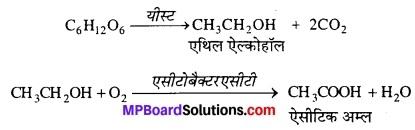MP Board Class 12th Biology Solutions Chapter 10 मानव कल्याण में सूक्ष्मजीव 3