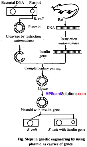 MP Board Class 12th Biology Solutions Chapter 11 Biotechnology Principles And Processes 7