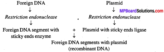 MP Board Class 12th Biology Solutions Chapter 11 Biotechnology Principles And Processes 8