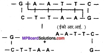 MP Board Class 12th Biology Solutions Chapter 12 जैव प्रौद्योगिकी एवं उसके उपयोग 2