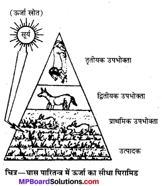 MP Board Class 12th Biology Solutions Chapter 14 पारितंत्र 11