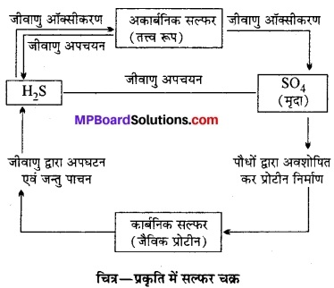 MP Board Class 12th Biology Solutions Chapter 14 पारितंत्र 19