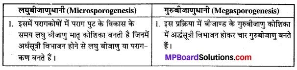 MP Board Class 12th Biology Solutions Chapter 2 पुष्पी पादपों में लैंगिक प्रजनन 1