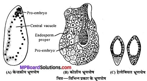 MP Board Class 12th Biology Solutions Chapter 2 पुष्पी पादपों में लैंगिक प्रजनन 12