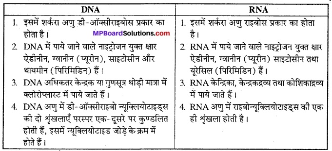 MP Board Class 12th Biology Solutions Chapter 6 वंशागति का आणविक आधार 11