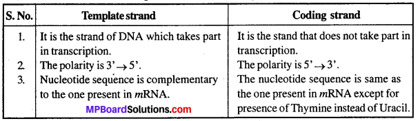 MP Board Class 12th Biology Solutions Chapter 6 Molecular Basis of Inheritance 5