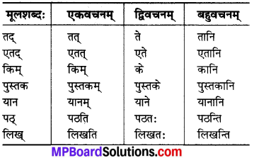 MP Board Class 6th Sanskrit Solutions Chapter 3 सर्वनामशब्दाः 16