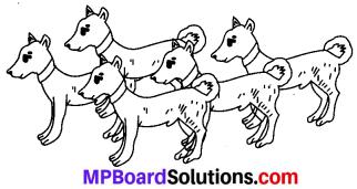 MP Board Class 6th Sanskrit Solutions Chapter 4 सङ्ख्याबोधः 6