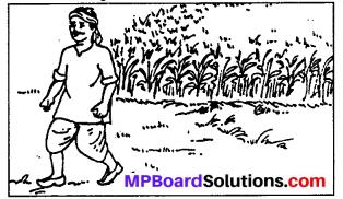 Class 6 Sanskrit Ch 9 Solutions MP Board
