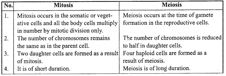 MP Board Class 11th Biology Important Questions Chapter 10 Cell Cycle and Cell Division 5