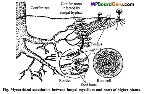 MP Board Class 11th Biology Important Questions Chapter 11 Transport in Plants 1