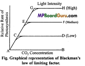MP Board Class 11th Biology Important Questions Chapter 13 Photosynthesis in Higher Plants 16