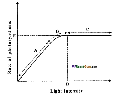 MP Board Class 11th Biology Important Questions Chapter 13 Photosynthesis in Higher Plants 6