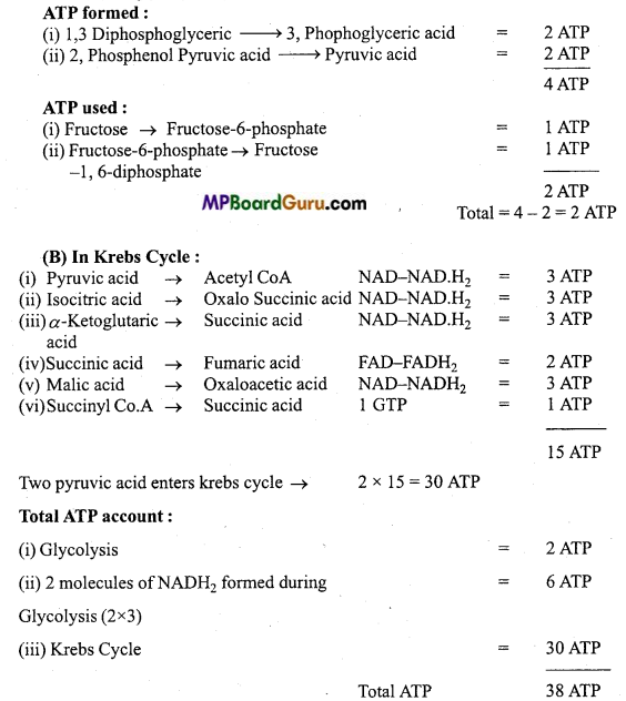 MP Board Class 11th Biology Important Questions Chapter 14 Respiration in Plants 14