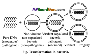 MP Board Class 11th Biology Important Questions Chapter 2 Biological Classification 16