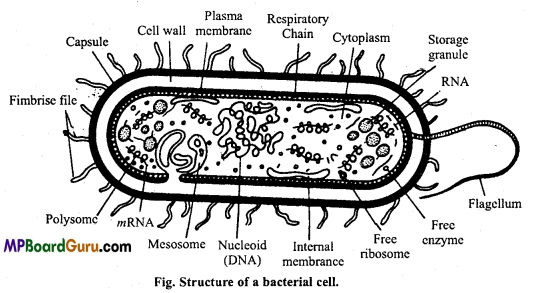 MP Board Class 11th Biology Important Questions Chapter 2 Biological Classification 2