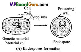 MP Board Class 11th Biology Important Questions Chapter 2 Biological Classification 5