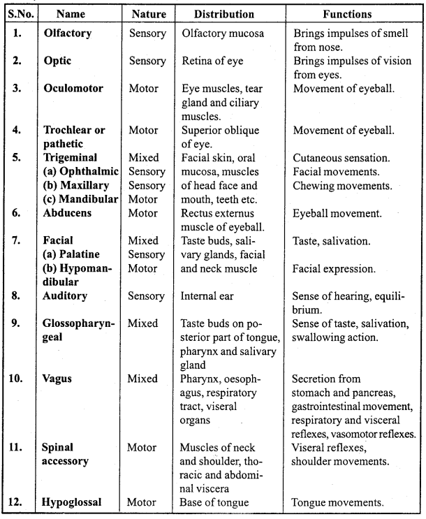 MP Board Class 11th Biology Important Questions Chapter 21 Neural Control and Coordination 16