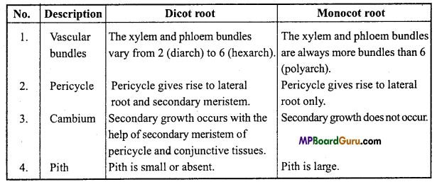 MP Board Class 11th Biology Important Questions Chapter 6 Anatomy of Flowering Plants 2