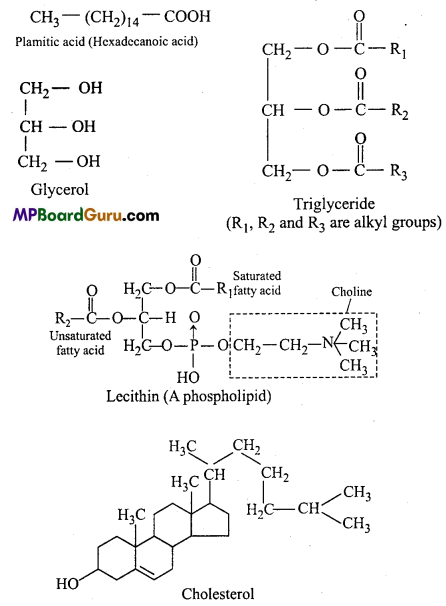 MP Board Class 11th Biology Important Questions Chapter 9 Biomolecules 17