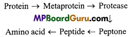 MP Board Class 11th Biology Important Questions Chapter 9 Biomolecules 2