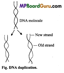 MP Board Class 11th Biology Important Questions Chapter 9 Biomolecules 6