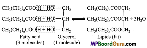 MP Board Class 11th Biology Important Questions Chapter 9 Biomolecules 8
